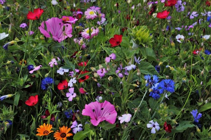flowers-3524938_1920